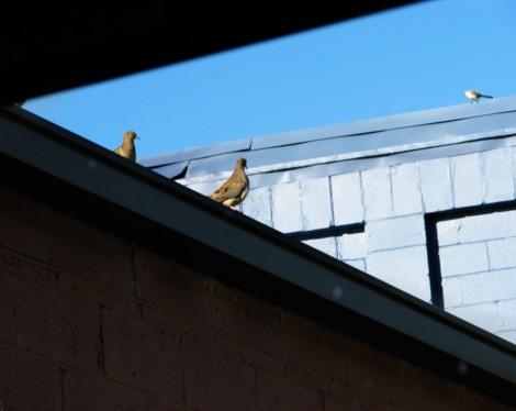 BirdWar